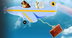 animal rescue,dog rescue,animal aid,dog rescue,no-kill shelters,pet rescue