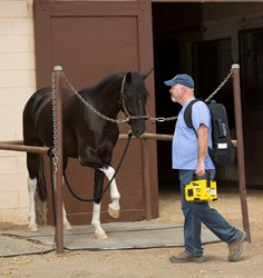 Equine veterinarian approaching patient with Sound-Eklin Sprint Ultralight DR™