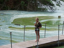 toxic algae, harmful algal bloom, water quality, health, dogs, drinking water