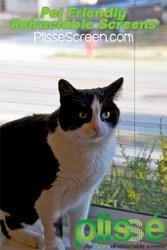 Pet Friendly Retractable Screens