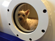 Announcing, Hyperbaric Oxygen Chamber Has Been Called Life Changing Miracle Treatment, Located at Holistic Vet Care in Oakland, California