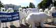 Exiled Polar Bears Converge on D.C. to Rally for Action on Climate