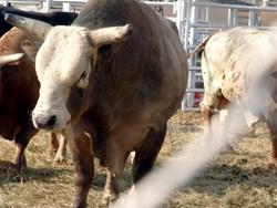 Phoenix Bull Run