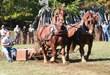 Blue Ridge Folklife Festival's Celebration of Regional Heritage,...