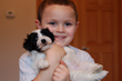 Long Time Breeder Royal Flush Havanese Offers Tips On Fostering A Successful Relationship Between Small Children And Small Dogs