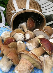 Wild Mushroom Celebration, Long Beach Peninsula, porcini, matsutake, Shelburne, Pelicano, The Depot, Boreas Inn, Ilwaco, Seaview, Long Beach, boletes, king bolete, chanterelle, forage, harvest, wild harvest, Pickled Fish, Jimella and Nanci's Market Cafe,