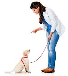 PetStore.com Dog Supplies