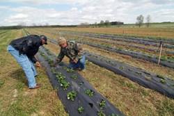 Farmers from the East Arkansas Enterprise Community