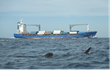 July 20th 2013, US cargo ship approaching whale sharks and swimming zone