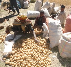 Ethiopian potatoe farmers