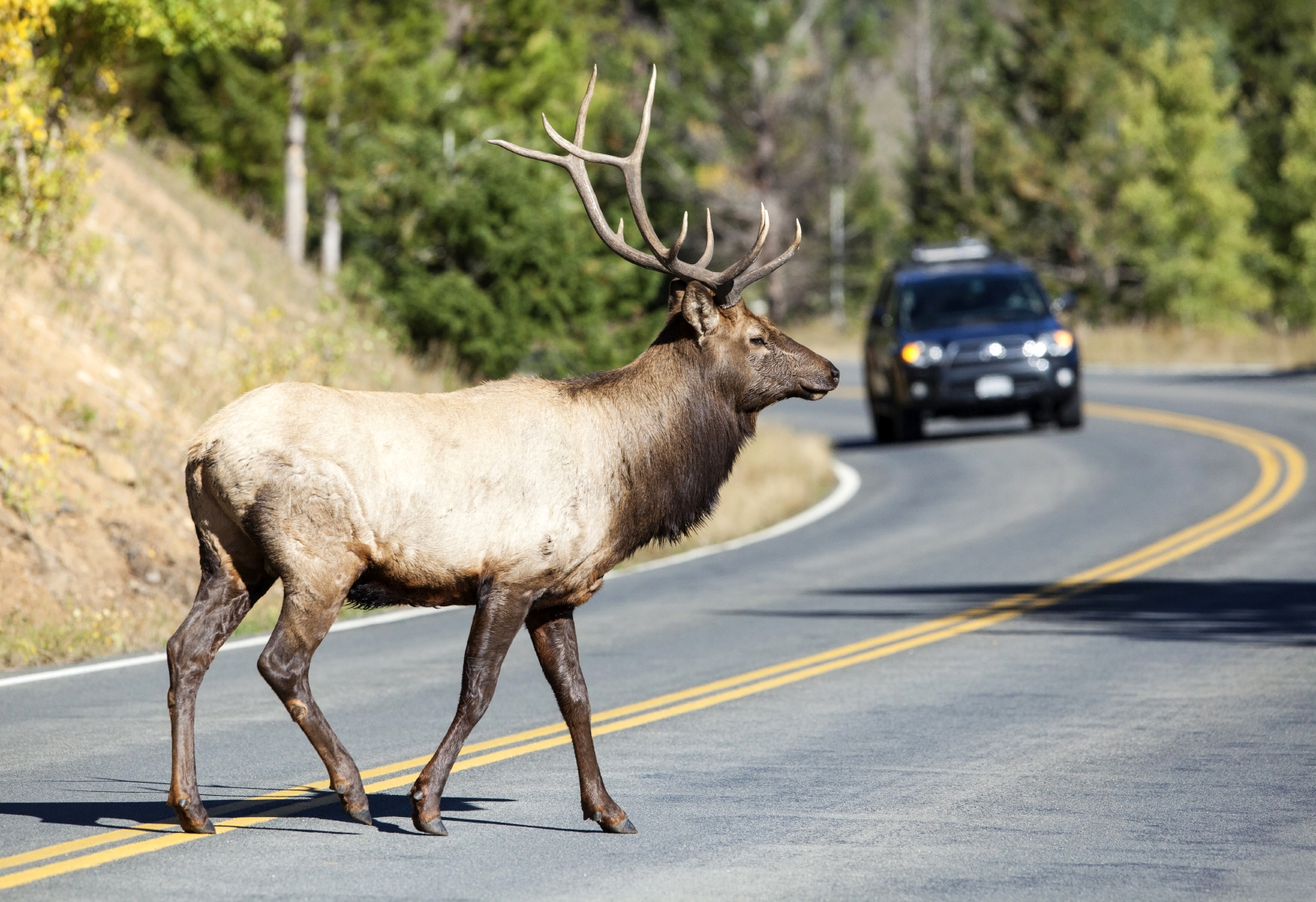 State With Most Deer Car Accidents