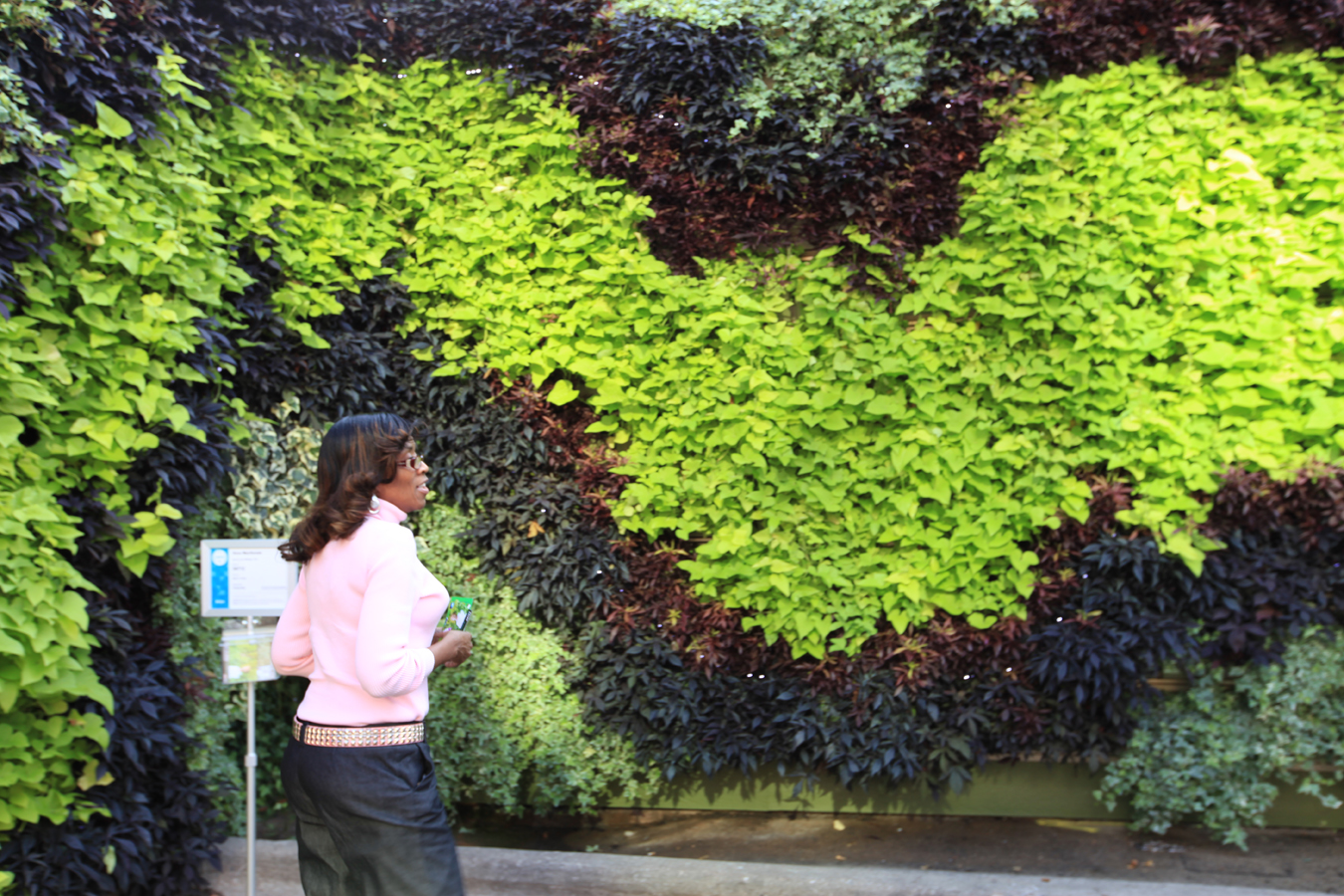 Pioneering an unprecedented revolutionary new art form - How to make a living wall ...