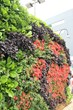 Dave MacKenzie's Back to Eden living wall is a multi-dimensional visual expression of horticulture