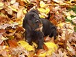 Fall Safety Tips for Pets from Canine Company