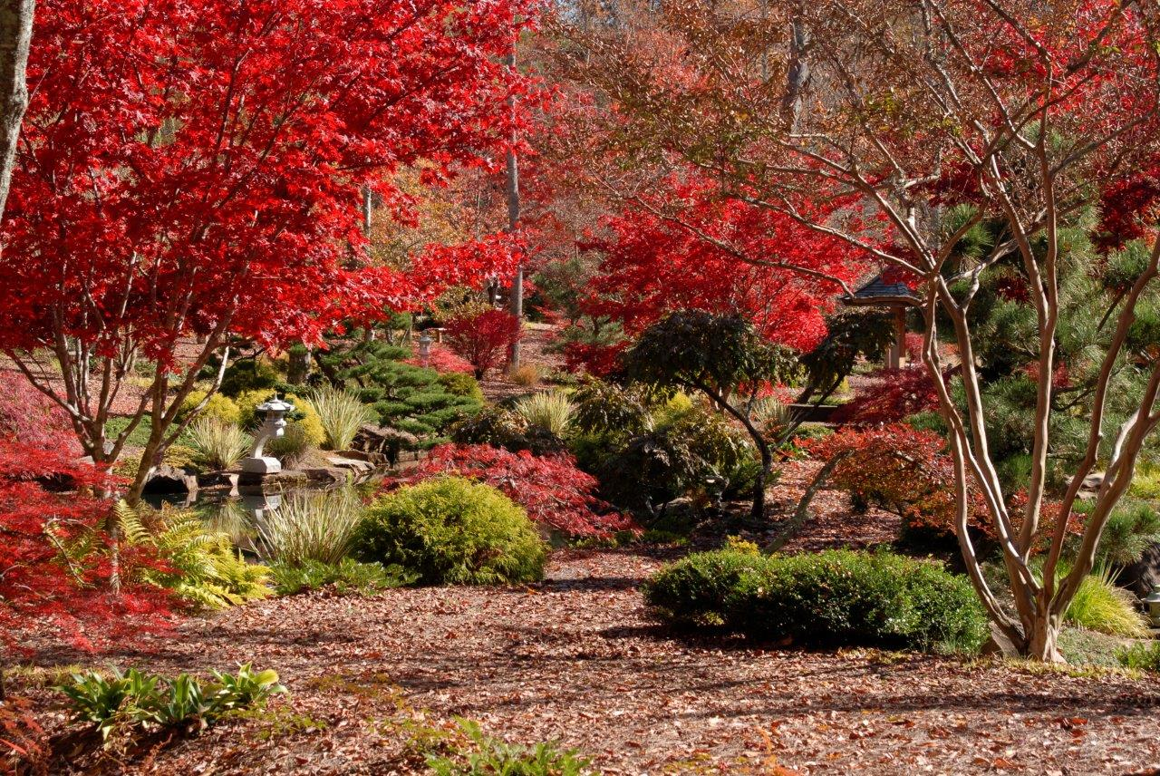 Georgia Garden: Japanese Maples Festival Blooms At Gibbs Gardens