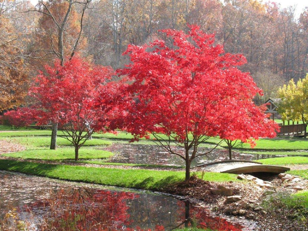 japanese maples festival blooms at gibbs gardens introducing a