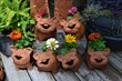 Happy Pig Pots from Big Grass