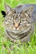 Animal Friends Insurance help fund neutering campaign with Shropshire...