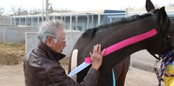 Kinesio Tape for Equines.