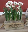 Paperwhites are easy to grow indoors with Longfield Gardens new gift kits