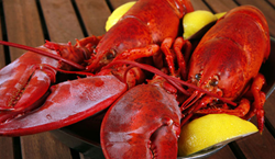 Specials on live Maine lobsters for delivery