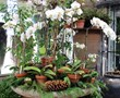 Phalaenopsis Orchids and Pine Cones