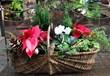 Holiday Garden