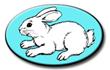Shea Bunny