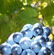 Leelanau Peninsula Wines Win Big at Pacific Rim
