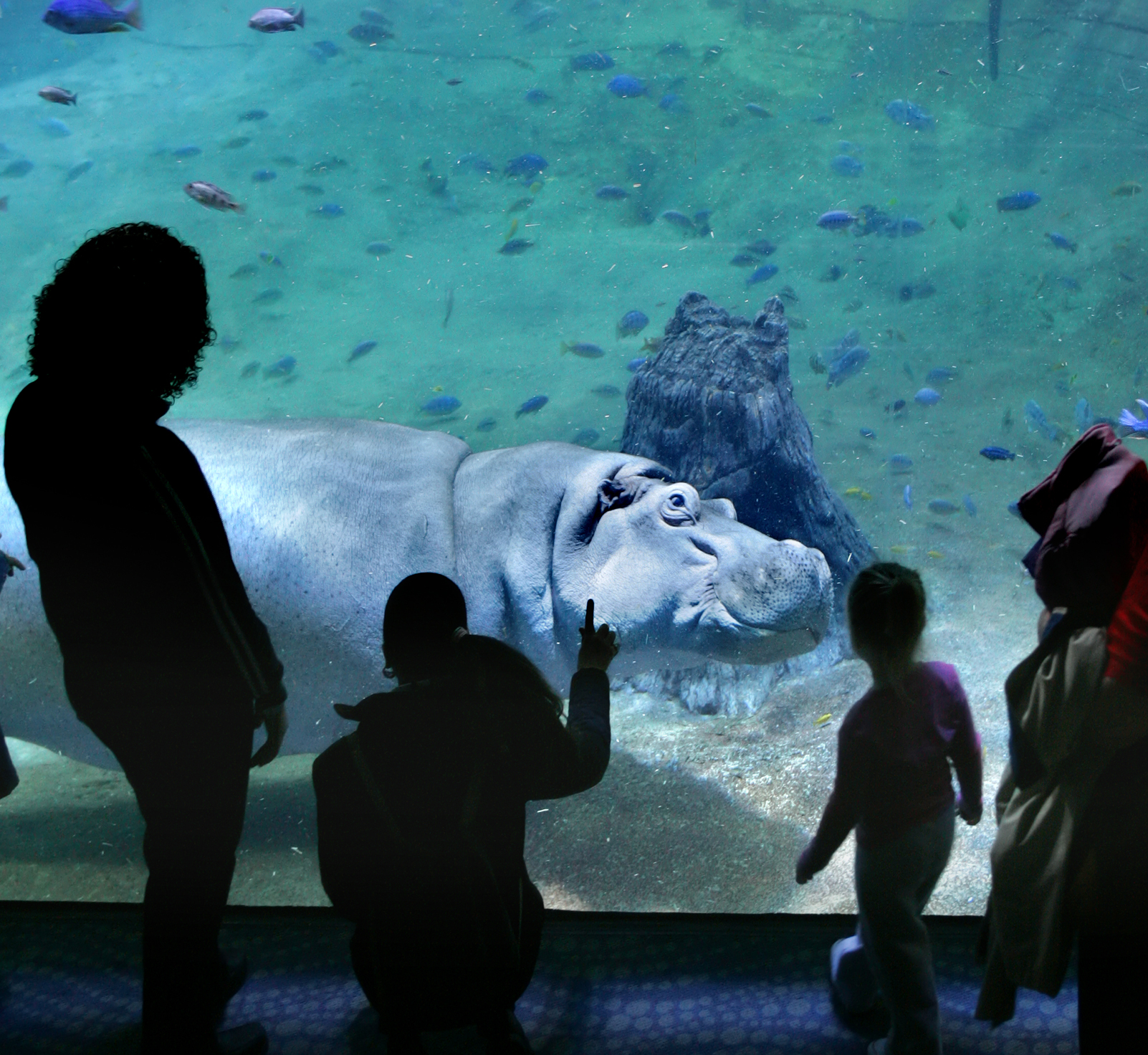 New Jersey's Adventure Aquarium Named One of the Best in the United States