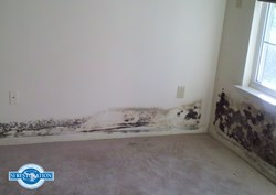 New Construction Mold Remediation SI Restoration
