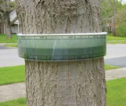 Environmentally Sound Traps Control Spring Cankerworm