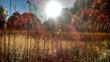 Solstice Serotonin (5HTP) Science Stories: New on the Bryan William...