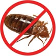 Prevent Bed Bugs using Cimi-Shield.