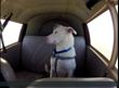 animal rescue,dog rescue,pet rescue,