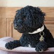 Lucy, Modeling Rhinestone Embedded QR Code Collar with Anchor Charm by PoshPetID