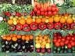 supermarkets, produce