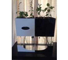 Tabletop Aquaponics
