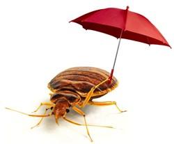 EcoRaider kills pesticide-resisting bed bugs