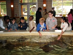 Students from Primoris Academy touch sting rays as part of their field trip to the Turtle Back Zoo in West Orange, NJ