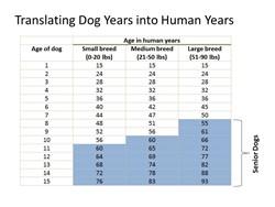 Translating Dog Years into Human Years