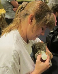 Exotic felines learn not to fear humans through gentle, close encounters such as bottle feeding.