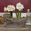 Fresh Holiday Gifts for Gardeners