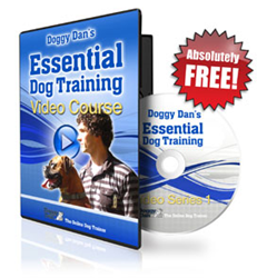 basic dog training how the online dog trainer