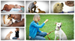 basic dog training the online dog trainer help