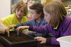 Students in Brooklyn start plants from seed for their school garden.