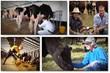 precision livestock farming guide to profitable livestock can