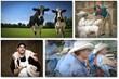 precision livestock farming guide to profitable livestock help