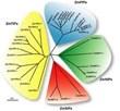 EurekaMag.com Publishes 9,112 Abstracts on Phylogenetics