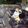 Who Chooses a Car -  You or Your Dog?